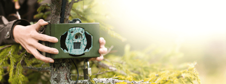 Best Trail Camera for Public Land 2021